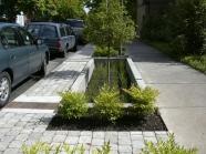Ô trồng cây có nền đất thấp và thông với cống thoát nước mưa để gia tăng khả năng chưá nước tại chỗ tại thành phố Portland (Hoa Kỳ)