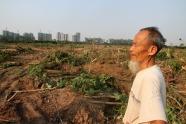 Cụ ông Nguyễn Ngọc Bính trên diện tích vườn sanh vừa bị cưỡng chế. Phía xa là một phần khu đô thị Ecopark - khu đô thị sinh thái lớn nhất miền Bắc. Ảnh: Nguyễn Hưng / Vnexpress
